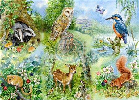 Nature study - c0
